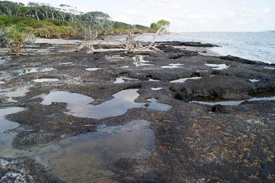 Big Talbot Island State Park: Blackrock beach