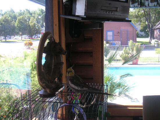 Blue Gables Motel : Davinci is a cute parrot!