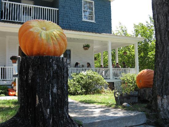 Louise's Kitchen : Huge pumpkins on their walk