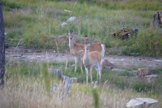 Horse Thief Campground: Deer behind the campground