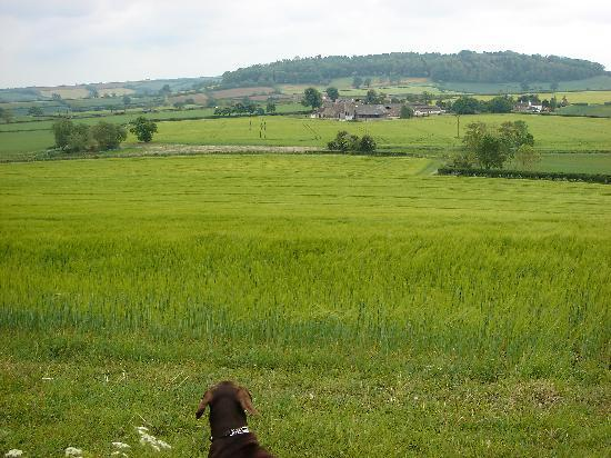 Corston Fields Farm : Walking with Lady