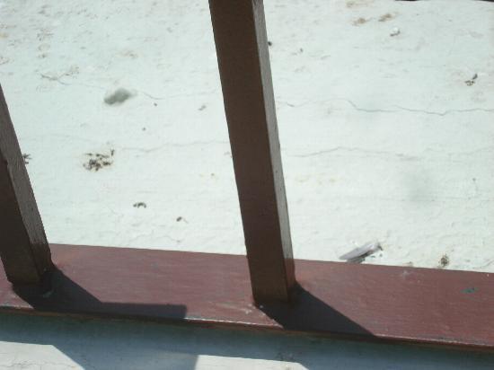 Tesoro Los Cabos: Bird poop & feathers
