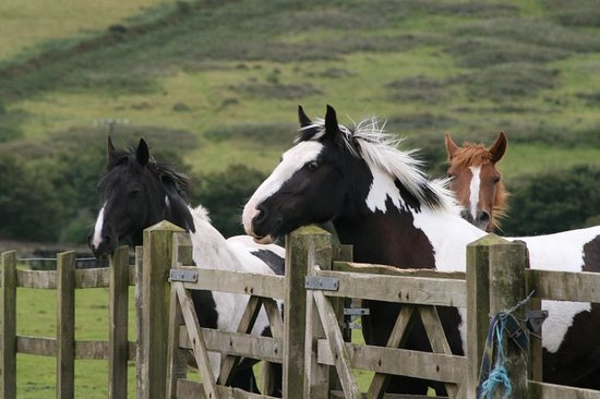 Cornish Riding Holidays: Gorgeous Horses xoxo