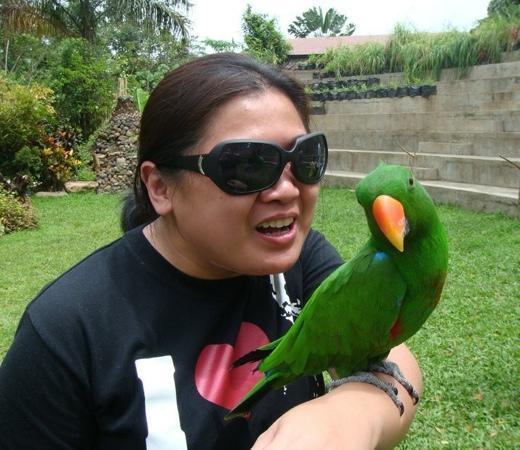 Malagos Garden Resort: malagos bird show parrot