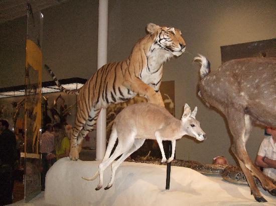 พิพิธภัณฑ์แห่งชาติสก็อตแลนด์: National Museum of Scotland 1