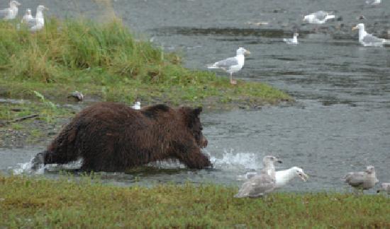 Fishing bear style picture of alaska fly n fish for Juneau alaska fishing