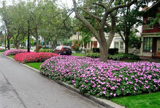 Eagle's Wing Bed and Breakfast: Flowering divider on the road in town