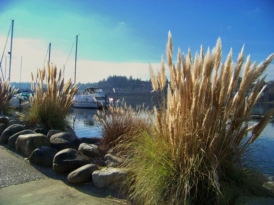 Olimpia, WA: A beautiful winter day in Olympia