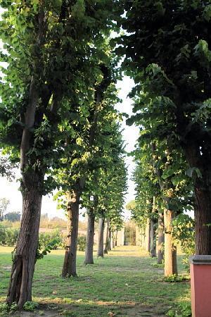 Hotel Domus Flegrea: The garden