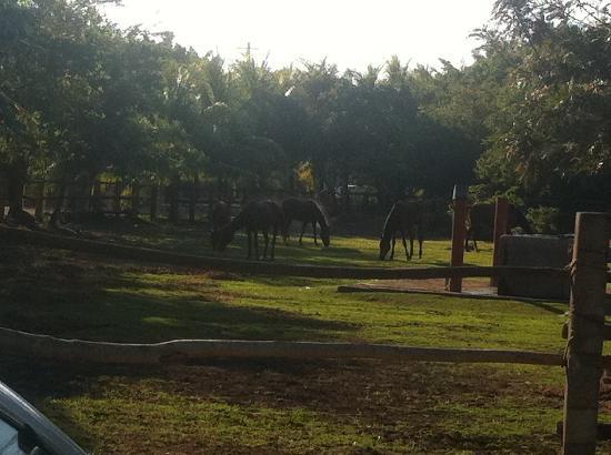Las Veraneras: Horseback Riding area