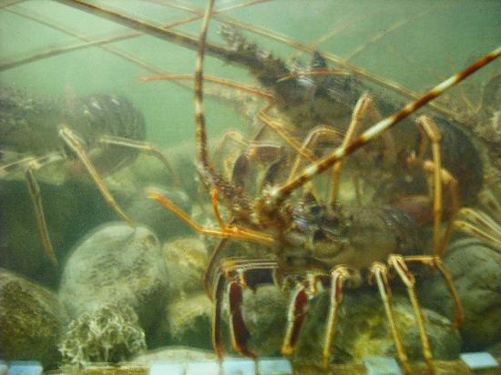 El Puerto: Choose your lobster from the aquarium