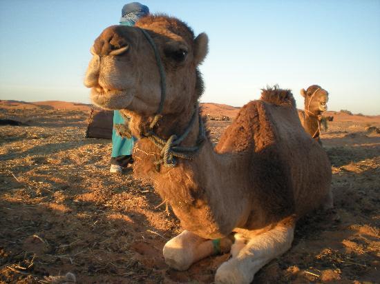 Riad Nezha: our ride