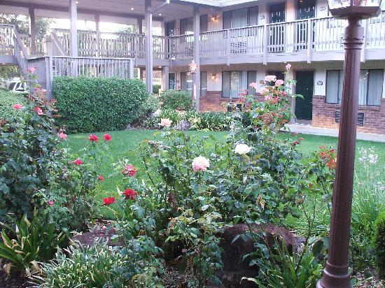 Woodland, CA: Rose Garden near my room