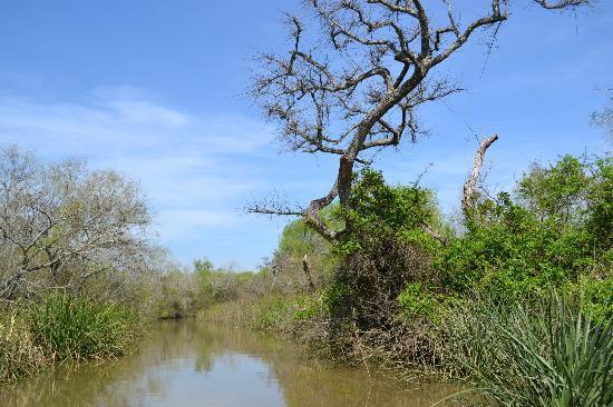 Safari Delta: View from the raft