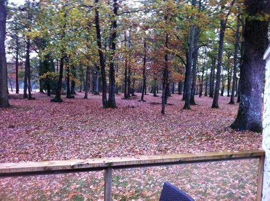 BEST WESTERN Le Bois de La Marche: le park