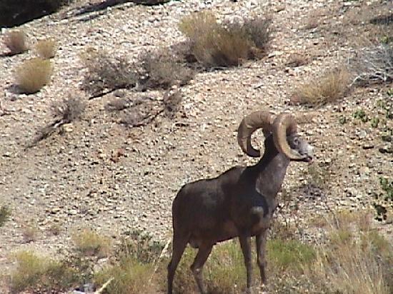 Las Vegas Rock Crawlers: Move please