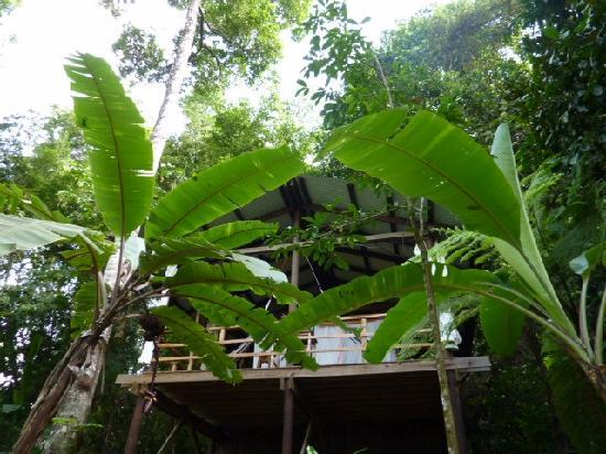 La Loma Jungle Lodge and Chocolate Farm: Cabin 3 - Front