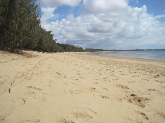 Flashpackers Hervey Bay: The beach 2 mins away from the hostel