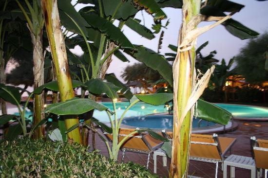 Baia del Sole Resort: bungalow con vista piscina