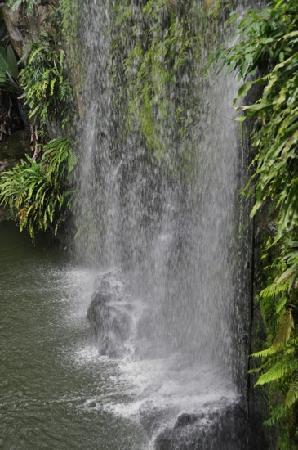 ตึกแฝดเปโตรนาส: Waterfall in the park