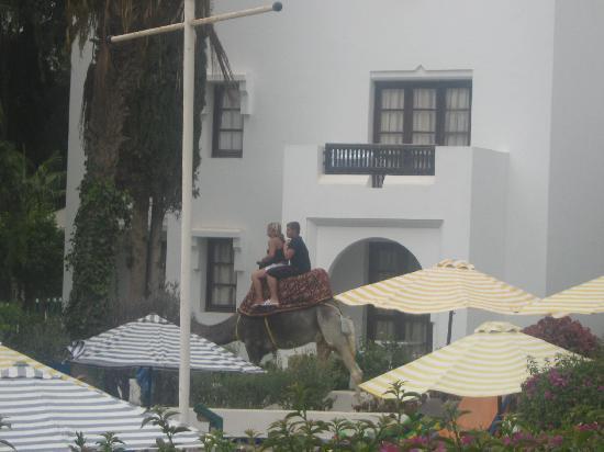 Caribbean Village Agador : petit riad au bord de la piscine ou se trouvait notre chambre