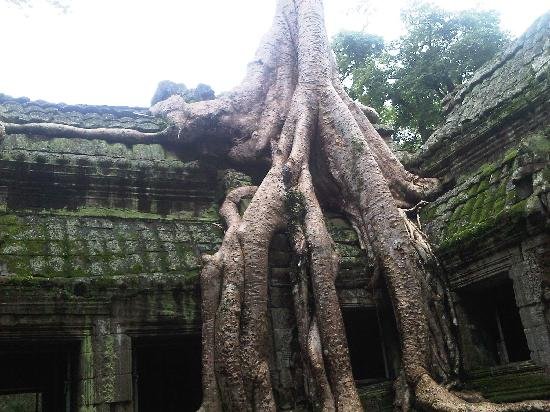 Saron Day Tours: Long long roots