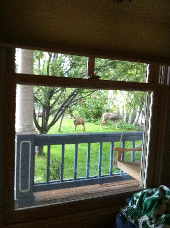 Apple Orchard Inn: Deer from our window