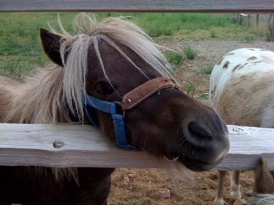 A Cowboy's Dream: There are miniature ponies out in the back.