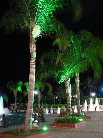 Alanya Gardens: A palm tree