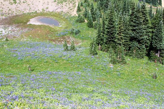 Crystal Mountain Hotels Alpine Inn: wildflowers