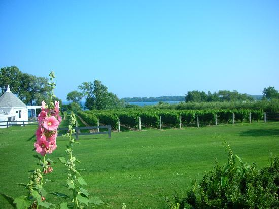 Prince Edward County Wine and Culinary Tours: Wapoo