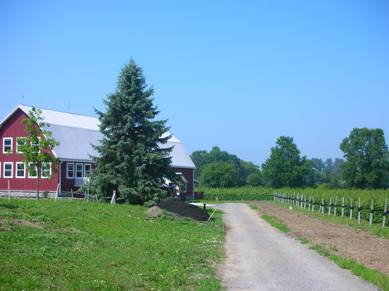Prince Edward County Wine and Culinary Tours: Tasting Room