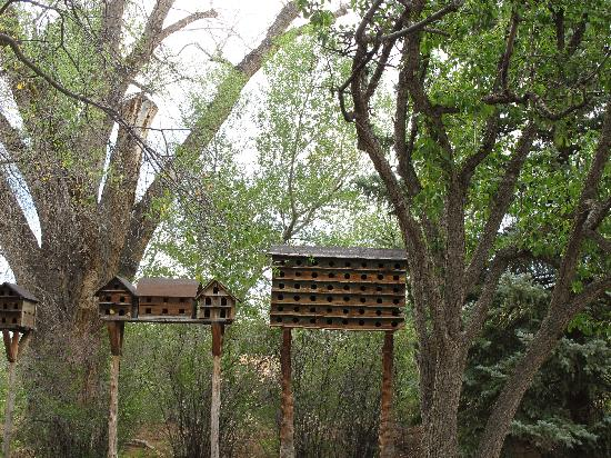 Mabel Dodge Luhan House: bird houses