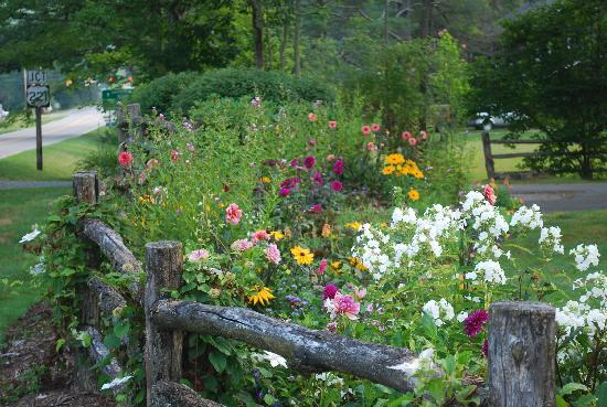 Eseeola Lodge at Linville Golf Club: Wild Flowers