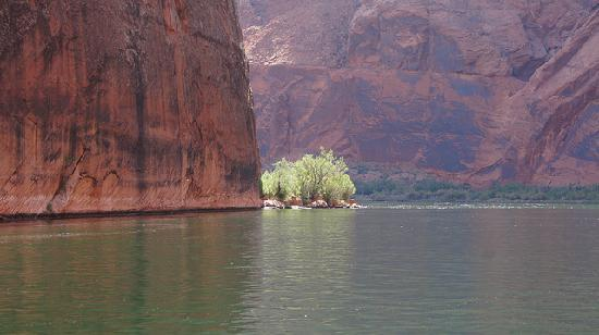 Colorado River Discovery: on the river