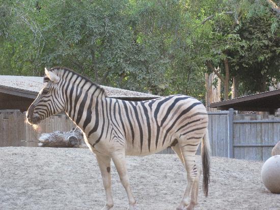 Fresno Chaffee Zoo : Fresno Zoo-California