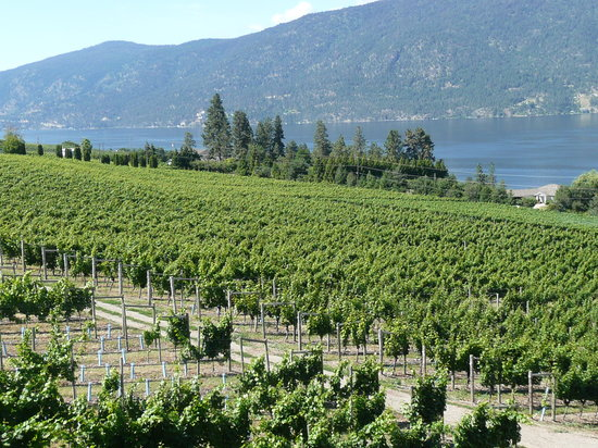Gray Monk Estate Winery : View from the Grape Vine restaurant