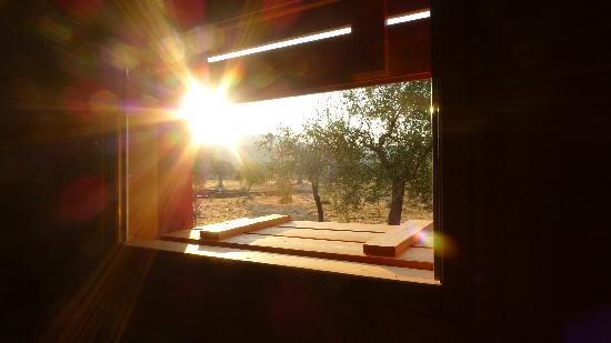 Eumelia Organic Agrotourism Farm & Guesthouse: a view from Sunflower House