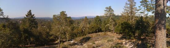 Henry Cowell Redwoods State Park: View from the observation deck