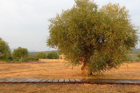 Eumelia Organic Agrotourism Farm & Guesthouse: olive glow