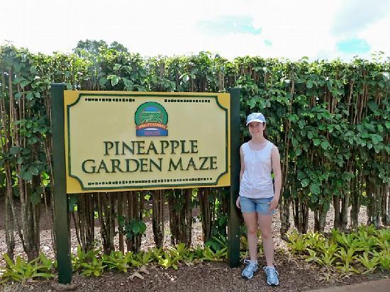 Dole Plantation: Entrance to the maze