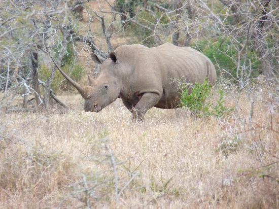 Sungulwane Hills Game Lodge: rhino (imfolozi)