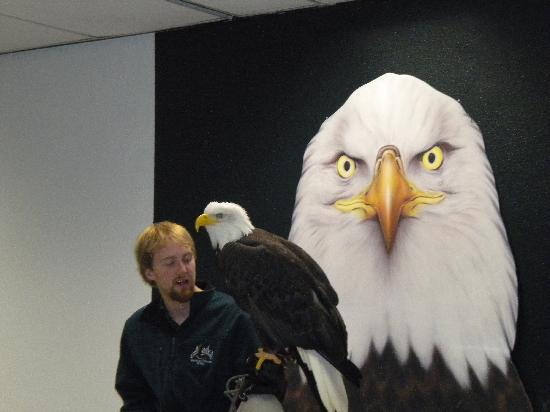 Alaska Raptor Center: Eagle and handler during presentation