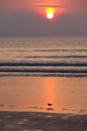 Cumberland Island National Seashore: Beach sunrise