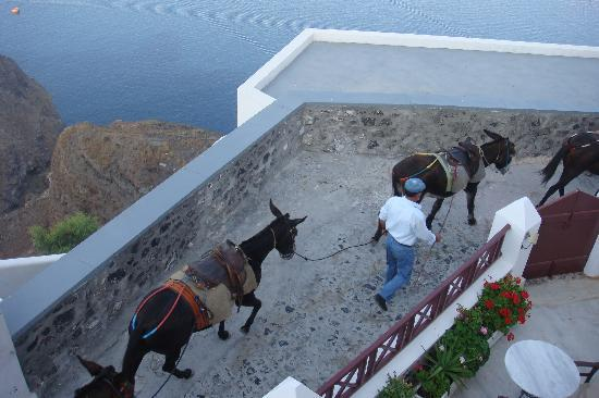 Aigialos Hotel: Donkeys being led past the front of the hotel