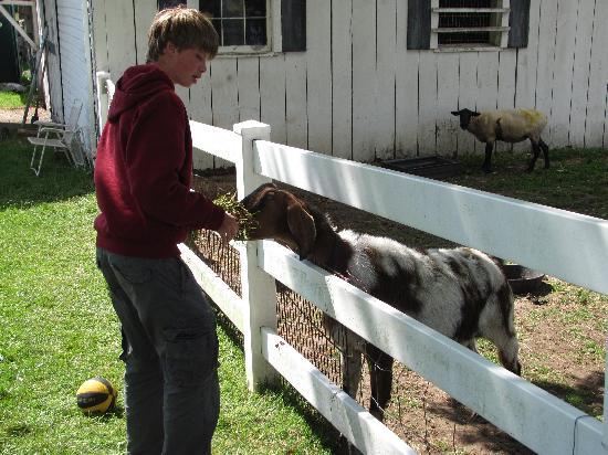 States Inn & Ranch: goats,, chickens, alpacas add to the peaceful atmosphere