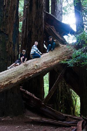 Redwood National Park : Stout Grove Trail