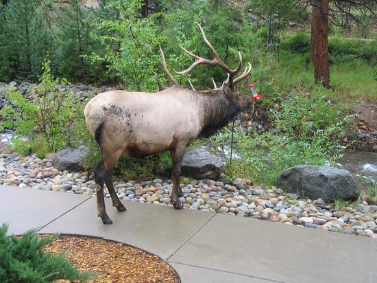 River Stone Resort and Bear Paw Suites: Here's something you don't see every day outside the front door!