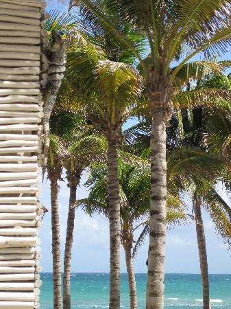 Mayan Palace at Vidanta Riviera Maya: Iguanas are everywhere