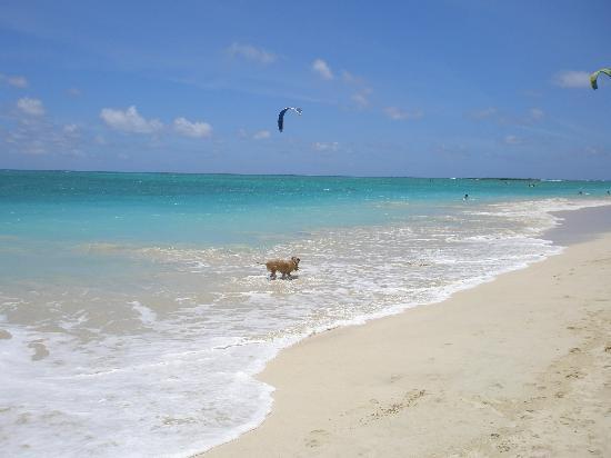 Kailua Beach Park: ロコが犬の散歩してました
